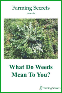 Gerhard-Grasser-What-Do-Weeds-Mean-To-You