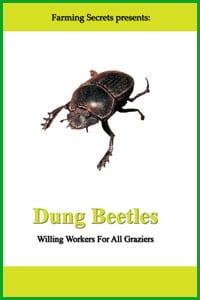 John-Feehan-Dung-Beetles