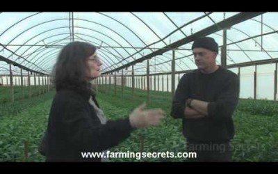 A Sneak Peak at a lilium farm looking for natural solutions for weeds pt 6 of 7