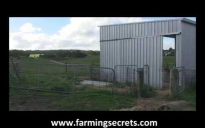 Discover How To Keep The Flies Out From Calves
