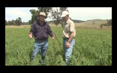 Growing Echidna Oats for High Yields