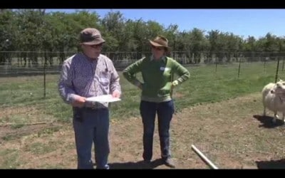 Holistic Management: What do you do to recover an overgrazed paddock?