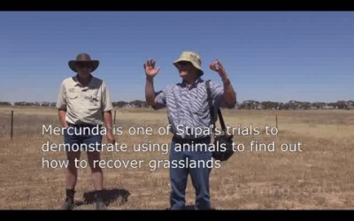 Using animals to regenerate grasslands